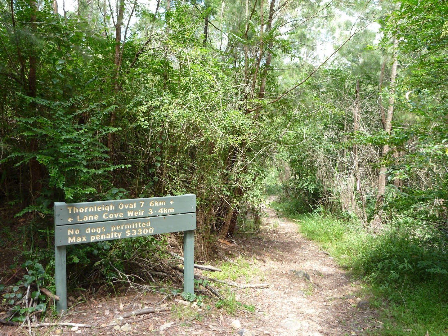 MM_20110120_003530_Well signposted section in Lane Cove NP