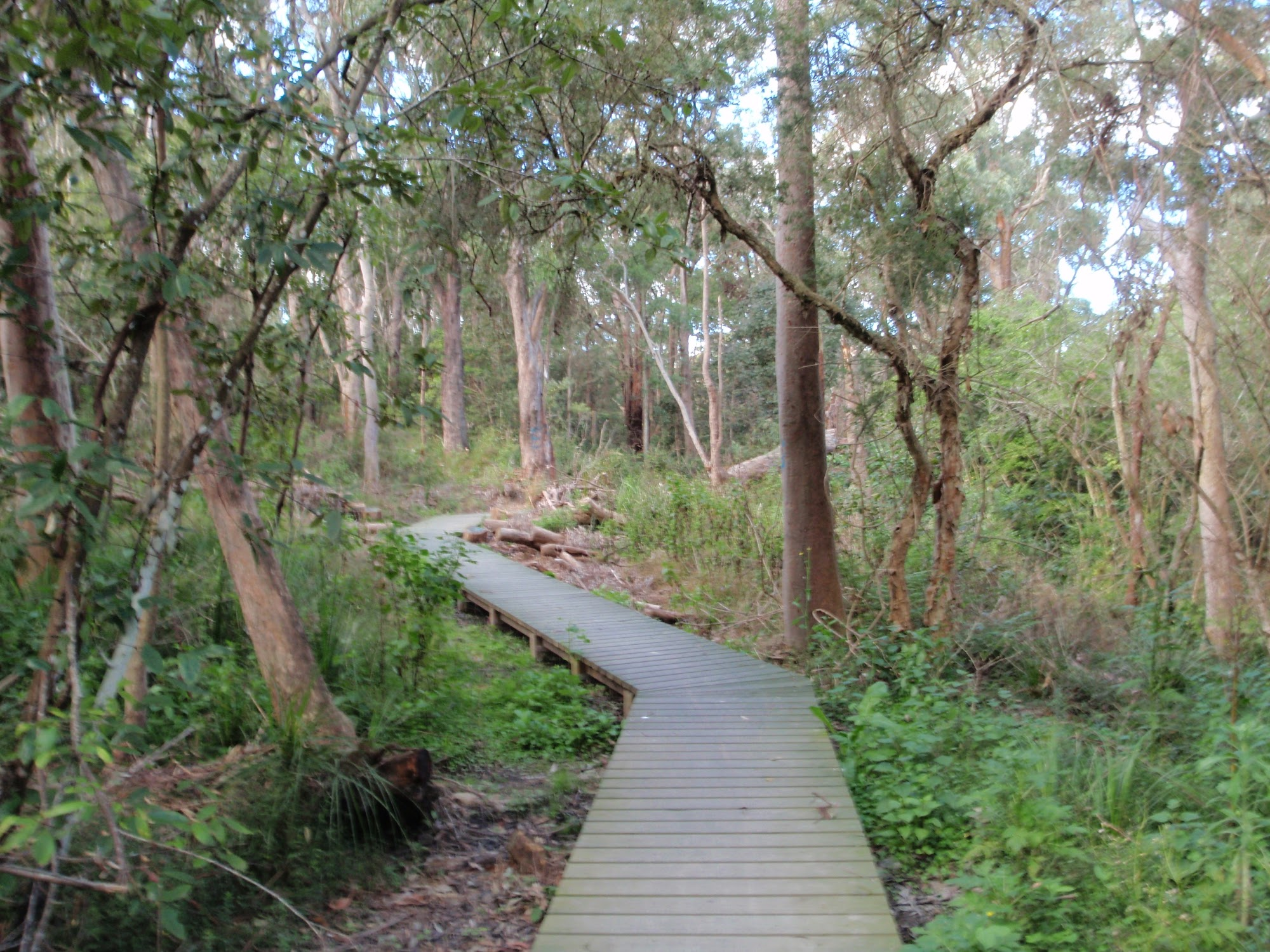 ww_photo_Boardwalk winding along Flaggy creek