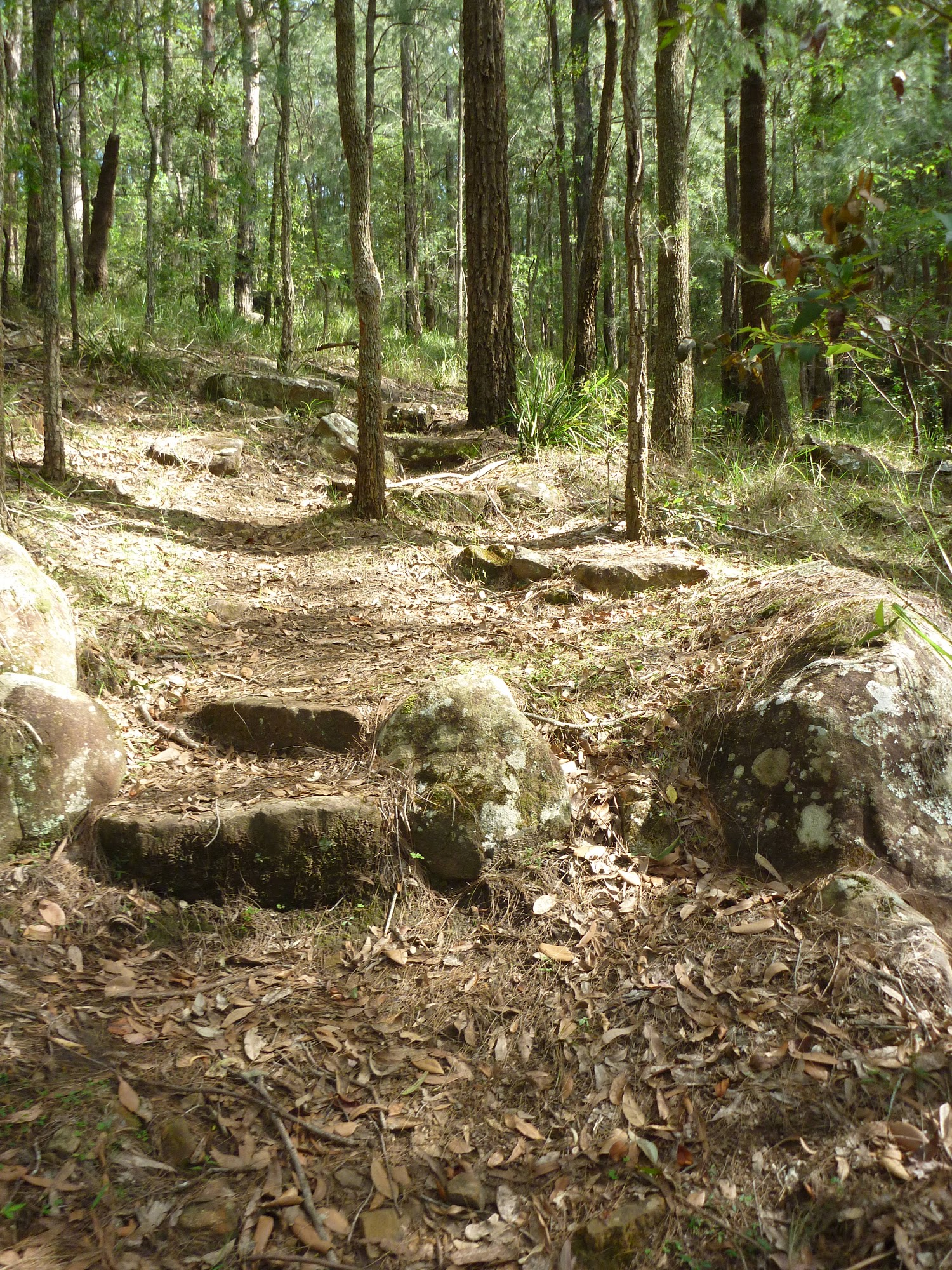ww_photo_The track on the north side of the ridge in Palm Grove NR
